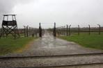 Auschwitz 14 3 272